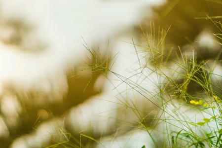 The grass on the edge of cold water. Stock Photo