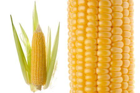 spadix: Closeup of the corncob isolated on white background Stock Photo