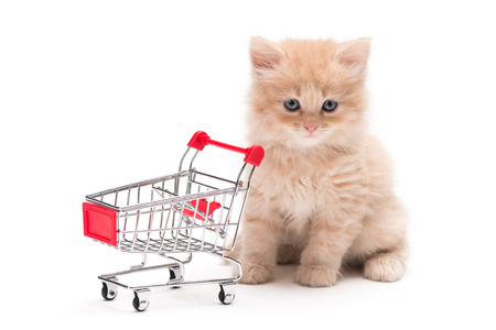 British kitten with shopping cart photo