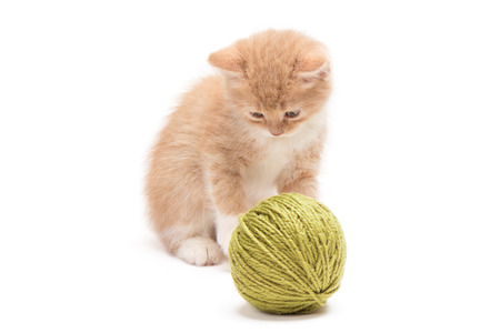 clew: Cream colored kitten playing with green clew