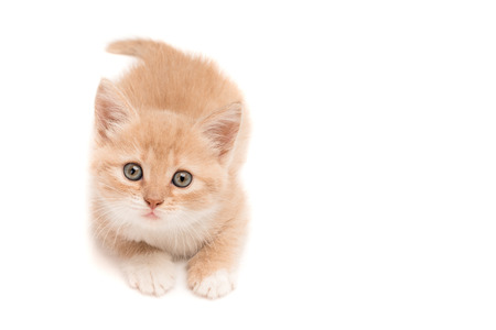 adroitness: Funny kitten lying on the studio floor hunting Stock Photo