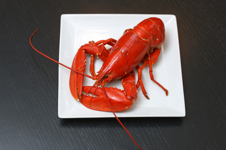 Boiled Atlantic Lobster on white square plate on dark wooden table photo