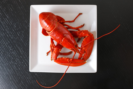 Boiled Atlantic Lobster on white square plate on dark wooden table. Top view 版權商用圖片