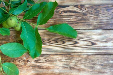 walnut tree: Branch of green walnut tree over rustic weathered background