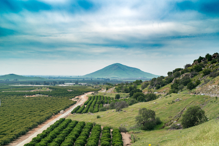 tree farming: The valley with fruit tree gardens and remote mountain Stock Photo