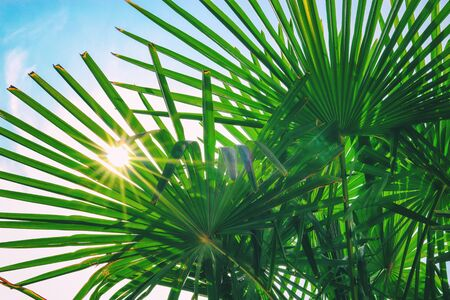 tropical palm leaf background, coconut palm trees perspective view. Background of palm leaves and sun on blue sky.  Concept: summer, vacation, exotic