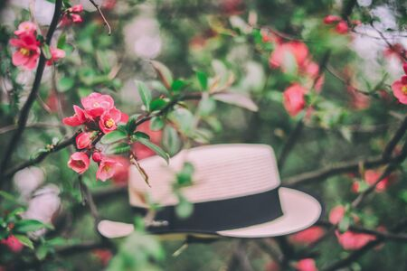 red flowers on the branches and straw hat on the background.  Close-up of many decorative red  flowers in a tree in full bloom in a garden in a sunny spring day, beautiful outdoor floral background Zdjęcie Seryjne