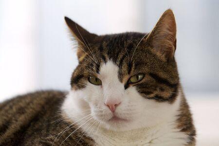 housecat: Cat