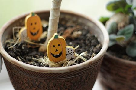 Decor Pumpkin