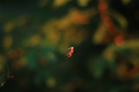 Spider weaves a web of macrophoto Stock Photo