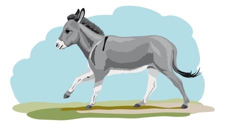galloping donkey Stock Illustratie