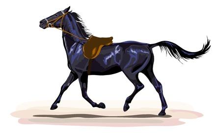 saddle: black horse trotting with saddle