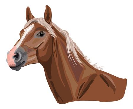 bruin paard in de kleur genaamd palomino Stock Illustratie