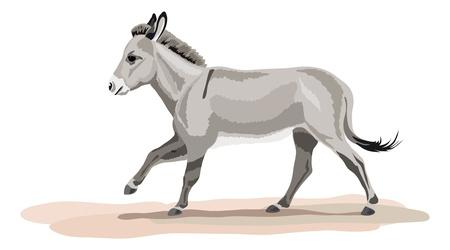 galopperen ezel op zandbodem