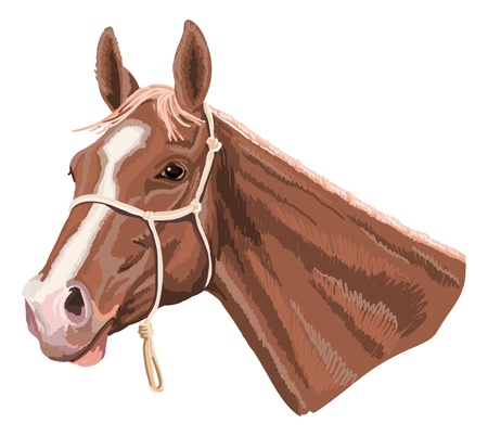 bridle: horse head with halter