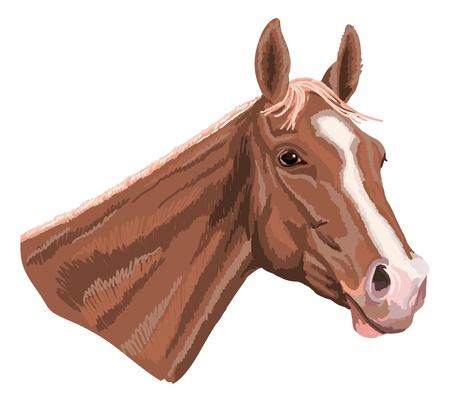 paard hoofd, zoals stijl looks geschilderd met viltstift Stock Illustratie