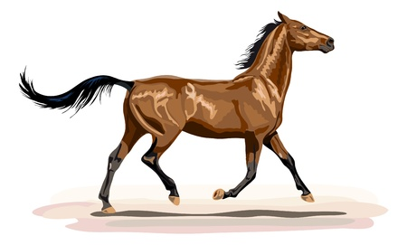 trotting: glossy brown horse trotting