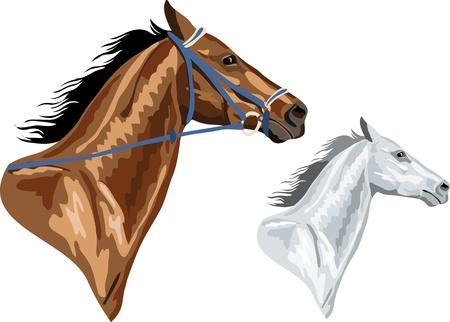 twee paarden hoofden - bruin met hoofdstel en wit in versie het hoofdstel kan verwijderd Stock Illustratie