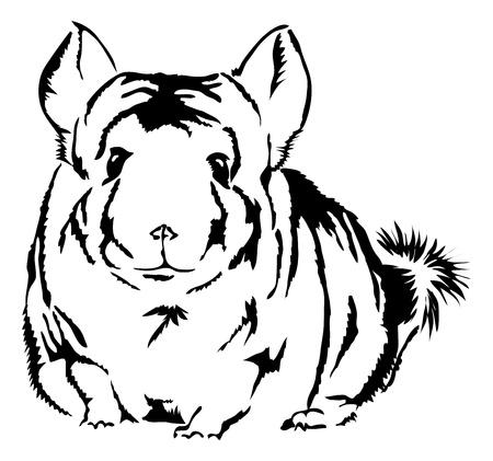 schattige Chinchilla (Chinchilla lanigera) op zoek nieuwsgierig Stock Illustratie