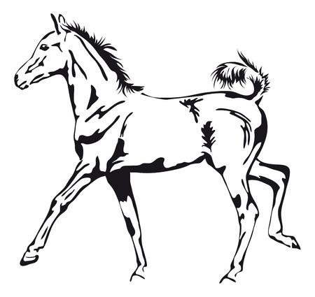 csikó: fekete-fehér körvonalai büszke csikó