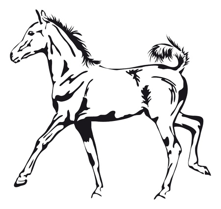 zwart-wit contouren van een trotse veulen