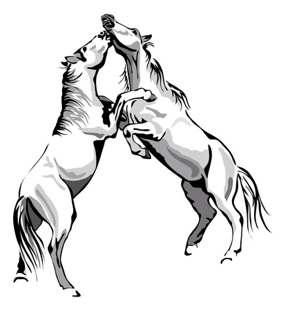 fighting horses - black and white outline Vector
