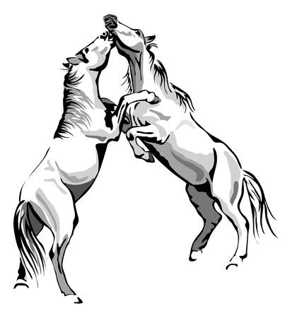 vechten paarden - zwart en wit overzicht