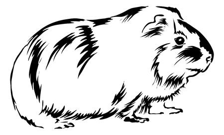 świnka morska: Guinea Pig siedzi na dole i patrzÄ…c ciekawy. Ilustracja