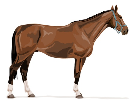 staande Duitse warmbloed paard met halter.Typical Duitse sportpaard
