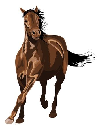 galop: cheval au galop sous le soleil. Beaucoup de reflets brillants. Illustration