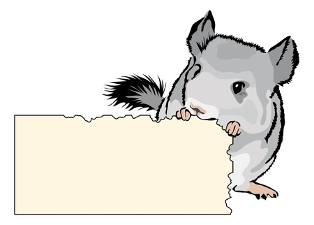 hamster: young Chinchilla nibbling on cardboard - add your own text