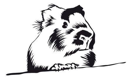 Guinea Pig looking around