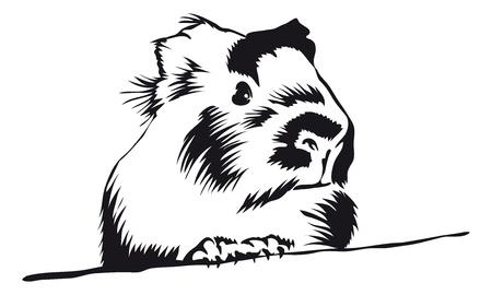 świnka morska: Guinea Pig rozglÄ…dajÄ…c