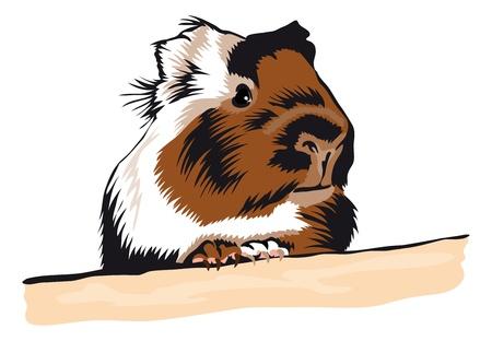 Guinea Pig rond te kijken Stock Illustratie