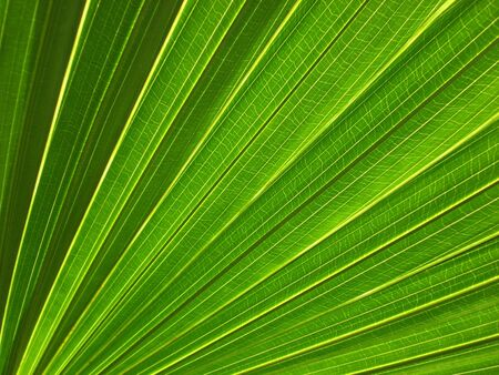 Leaf Surface Vein Pattern Stock Photo