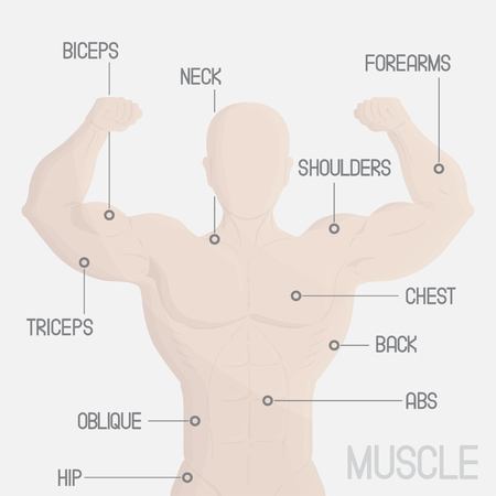 forearms: male part muscle gym illustration