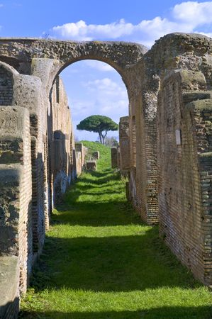 a pine framed by an arch of the old Ostia Thermae remains photo