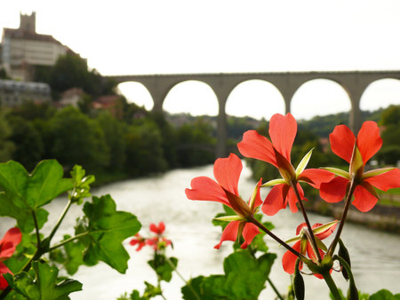 A red geranium and in the background the Zaehringen bridge that leads to the old city, on the Sarine river Stock Photo - 122615698