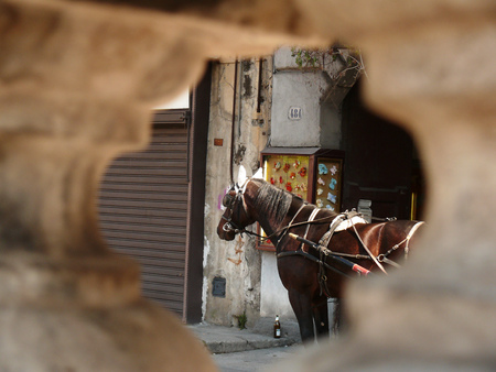 Close up of a horse seen from a hole on a wall.