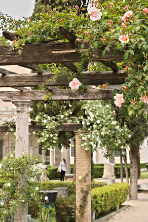 Garden in the archaeological area of Rome with a pergola of roses. Stock Photo
