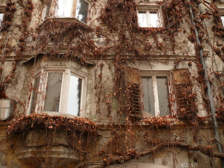 A large plant covers a facade. The leaves are dried in winter. Foto de archivo
