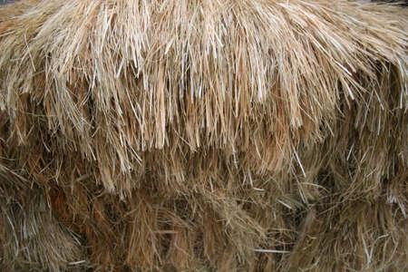 thatch: thatch
