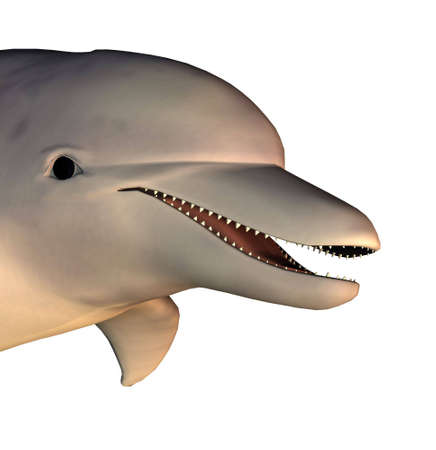 render dolphin photo