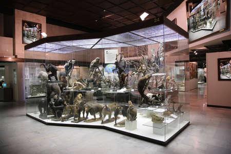 primate exposition Stock Photo - 2274937