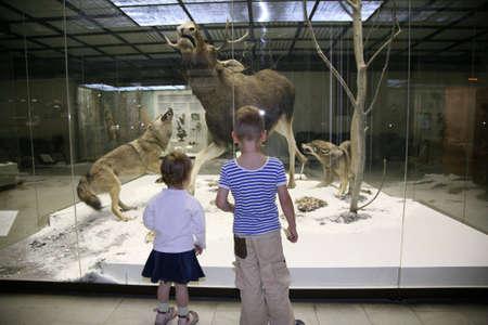 mus�e: enfants dans le mus�e naturel Banque d'images