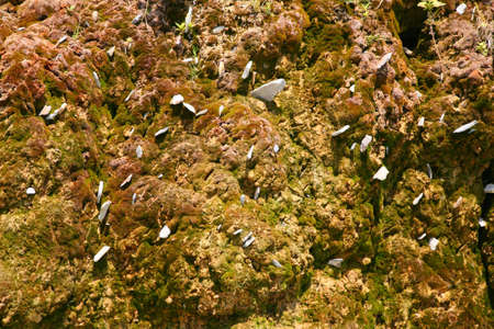 Rock covered with moss background photo