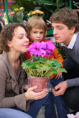 Parents and child with pot in flower shop, smell flower, focus on little girl Stock Photo - 5357369