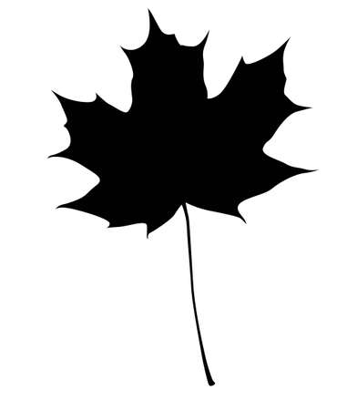 vector maple leaf