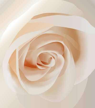 morning dew: vector white rose closeup