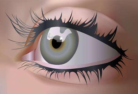 vector eye Stock Vector - 6629900